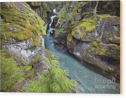 Avalanche Gorge In Glacier National Park Wood Print