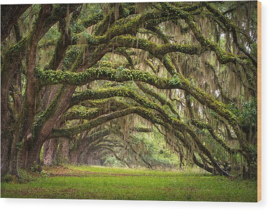 Avenue Of Oaks - Charleston Sc Plantation Live Oak Trees Forest Landscape Wood Print