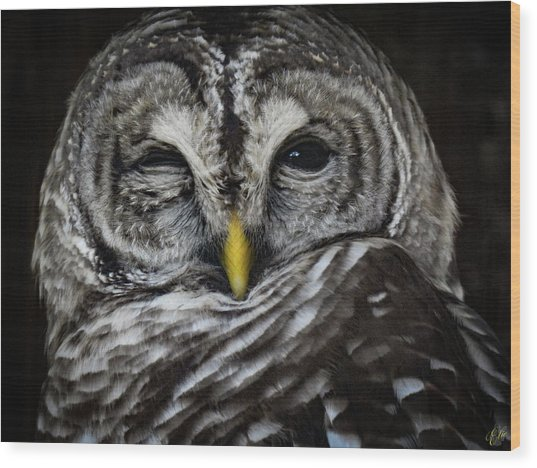 Avery's Owls, No. 11 Wood Print
