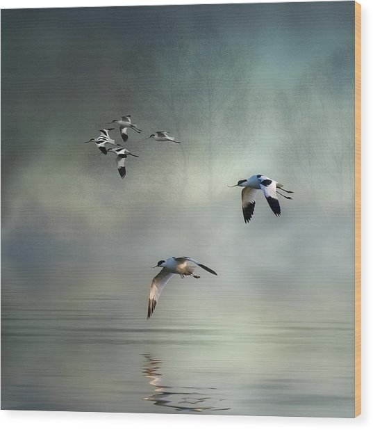 Avocet Dawn Wood Print