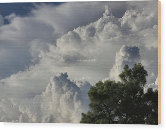 Awesome Cloulds And A Pine Tree Wood Print by Maris Salmins