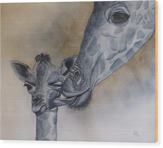Baby And Mother Giraffe Wood Print