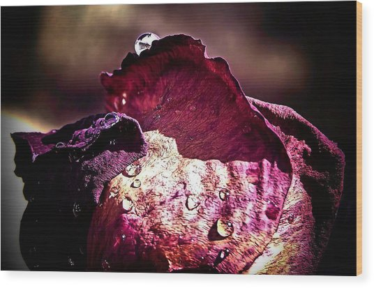 Axl Rose Wood Print by Karen Scovill
