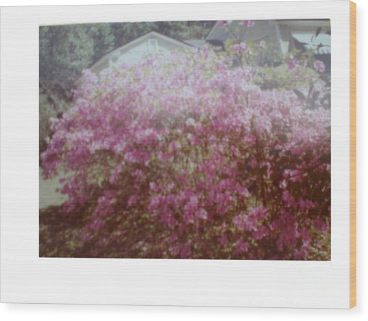 Azalea Framed By Roof Wood Print by Hal Newhouser