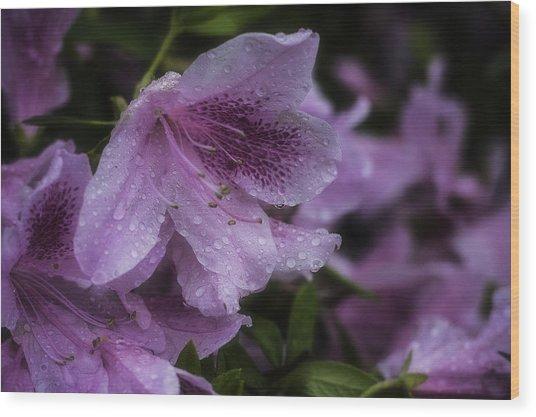 Azalea In Bloom Wood Print