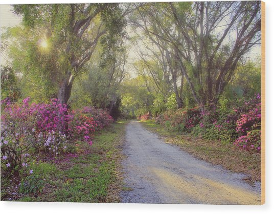 Azalea Lane By H H Photography Of Florida Wood Print