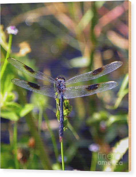 Azure Dragonfly Wood Print