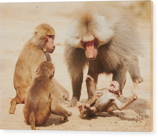 Baboon Family Having Fun In The Desert Wood Print