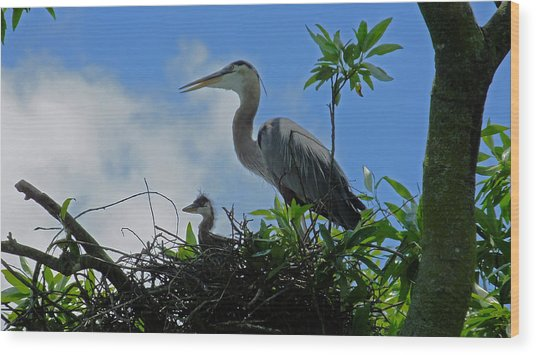 Baby And Mom Great Blue Heron Wood Print