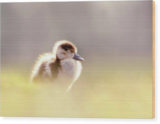 Baby Animals Series - Zen Gosling Wood Print