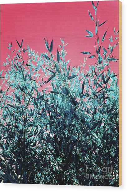 Baby Bamboo - Deep Pink And Blue Wood Print