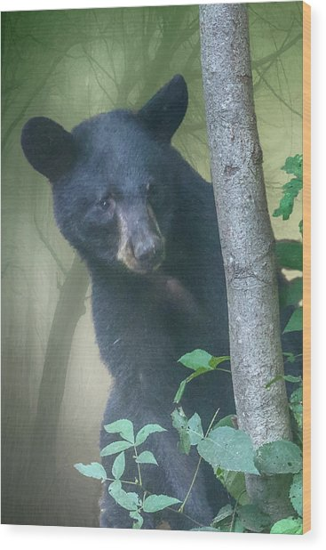 Baby Bear Takes A Peek Wood Print