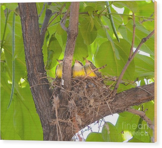 Baby Birds Waiting For Mom Wood Print