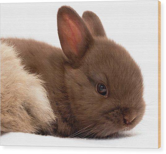 Baby Bunny  #03074 Wood Print