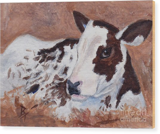 Baby Cow Aceo Wood Print