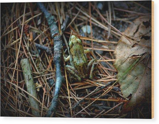 Baby Frog Wood Print
