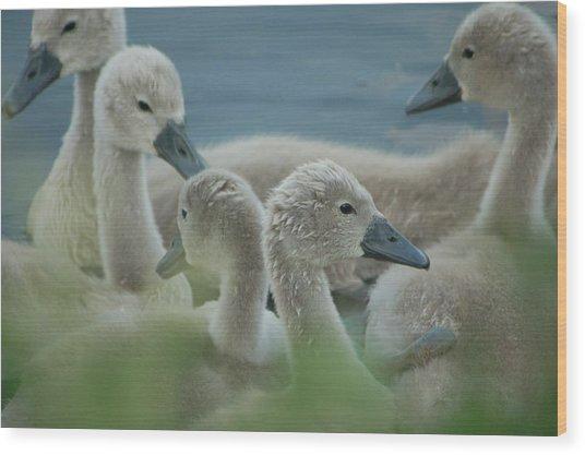 Baby Geese Wood Print
