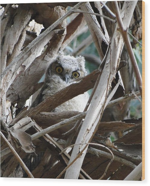 Baby Horned Owl Wood Print