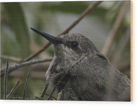 Baby Humming Bird Wood Print