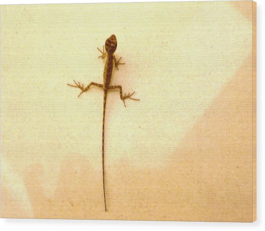 Baby Lizard Wood Print