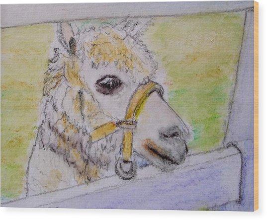 Baby Llama Wood Print by Lessandra Grimley