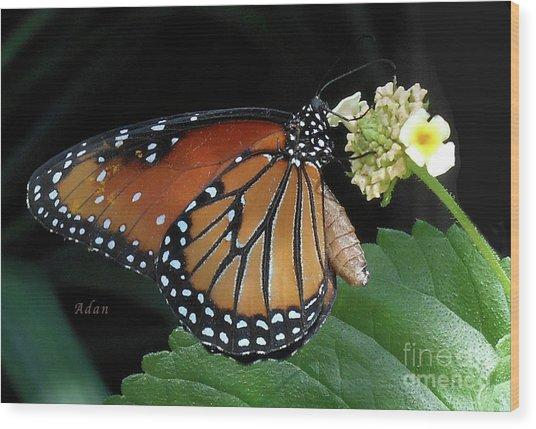 Baby Monarch Macro Wood Print
