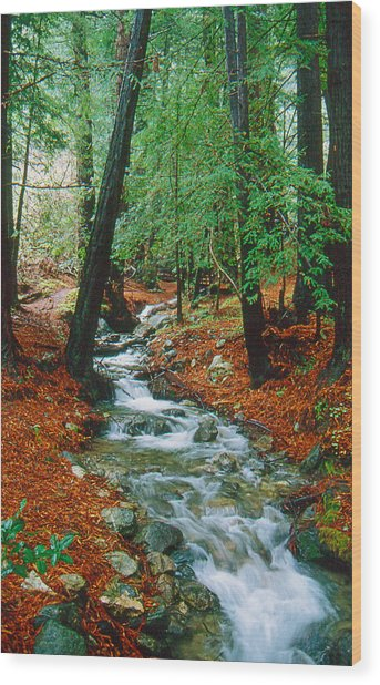 Back Country Creek Wood Print