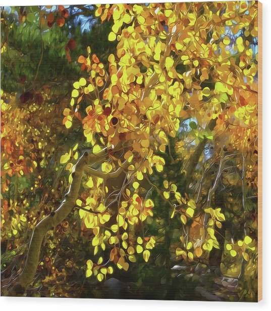 Back Lit Aspen Tree A Stylized Landscape By Frank Lee Hawkins Wood Print