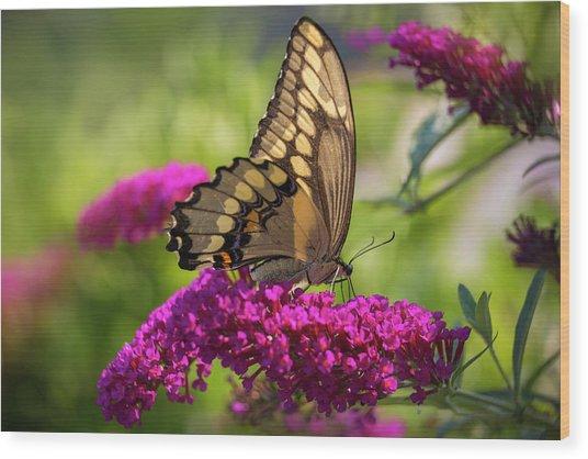 Back-lit Papilio Wood Print