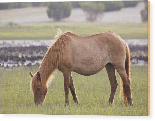 Back-lit Wild Horse Wood Print