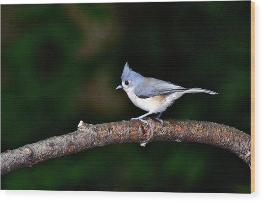 Back Yard Bird Wood Print