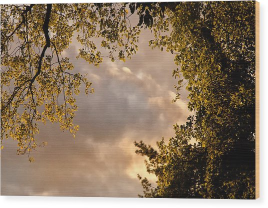 Back Yard Clouds Wood Print by Ross Powell