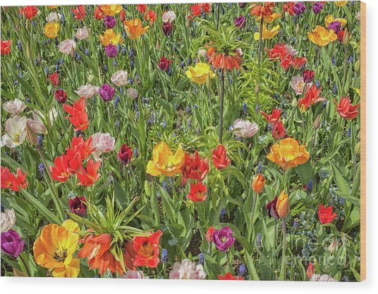 Background Of Colorful Flowers Wood Print