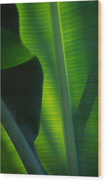Backlit Banana Leaves Wood Print