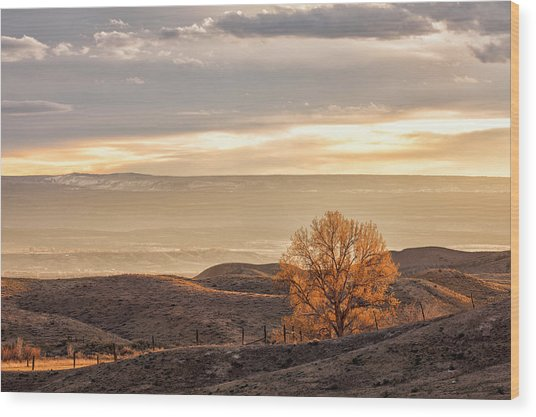 Backlit Cottonwood Wood Print
