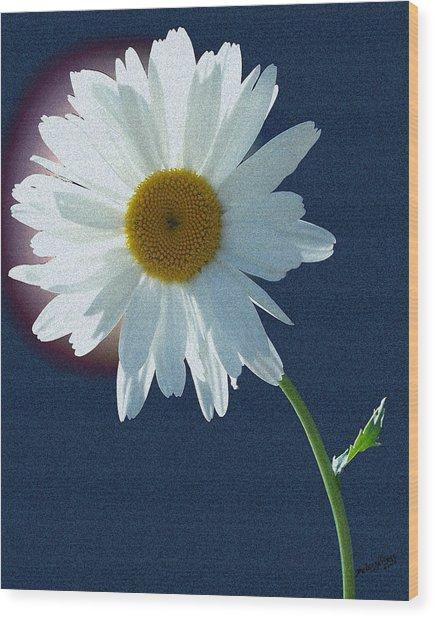 Backlit Daisy Wood Print
