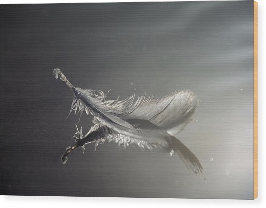 Backlit Feather Wood Print
