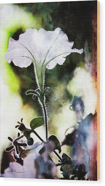 Backlit White Flower Wood Print