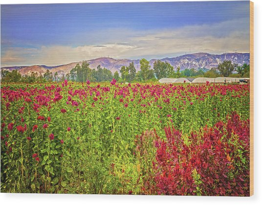Backroad Beauty In Southern California Wood Print