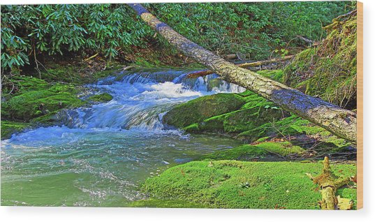 Backwoods Stream Wood Print