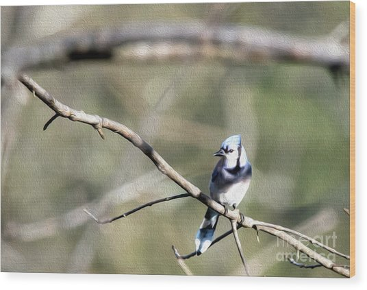 Backyard Blue Jay Oil Wood Print