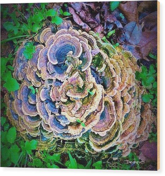 Backyard Mushroom  Wood Print