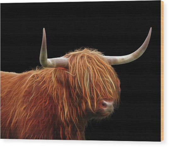 Bad Hair Day - Highland Cow - On Black Wood Print