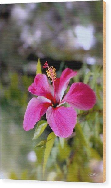 Bahamian Flower Wood Print