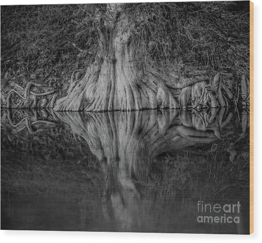Bald Cypress Reflection In Black And White Wood Print