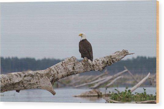 Bald Eagle #1 Wood Print