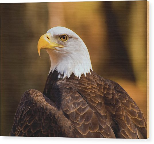 Bald Eagle 2 Wood Print