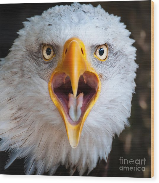 Bald Eagle Call Wood Print