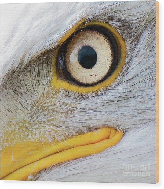 Bald Eagle Eye Wood Print