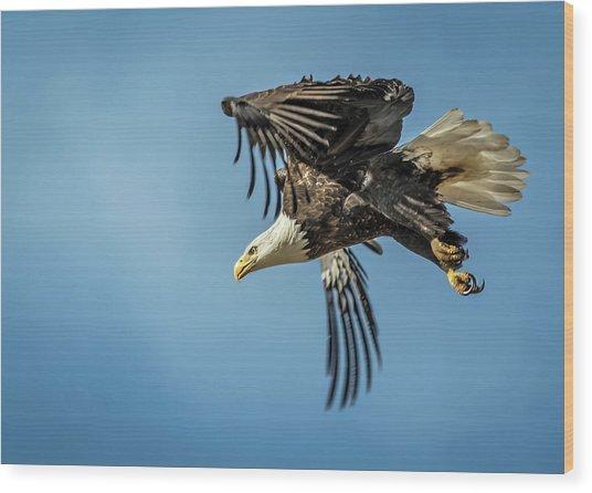 Bald Eagle Flight 1 Wood Print